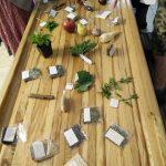 Tagh O'cuinn herbs