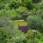 herb garden 19th June